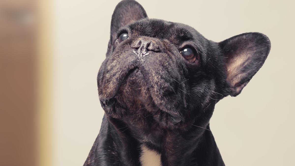 6 niepokojących objawów u psa. Na co warto zwrócić uwagę?
