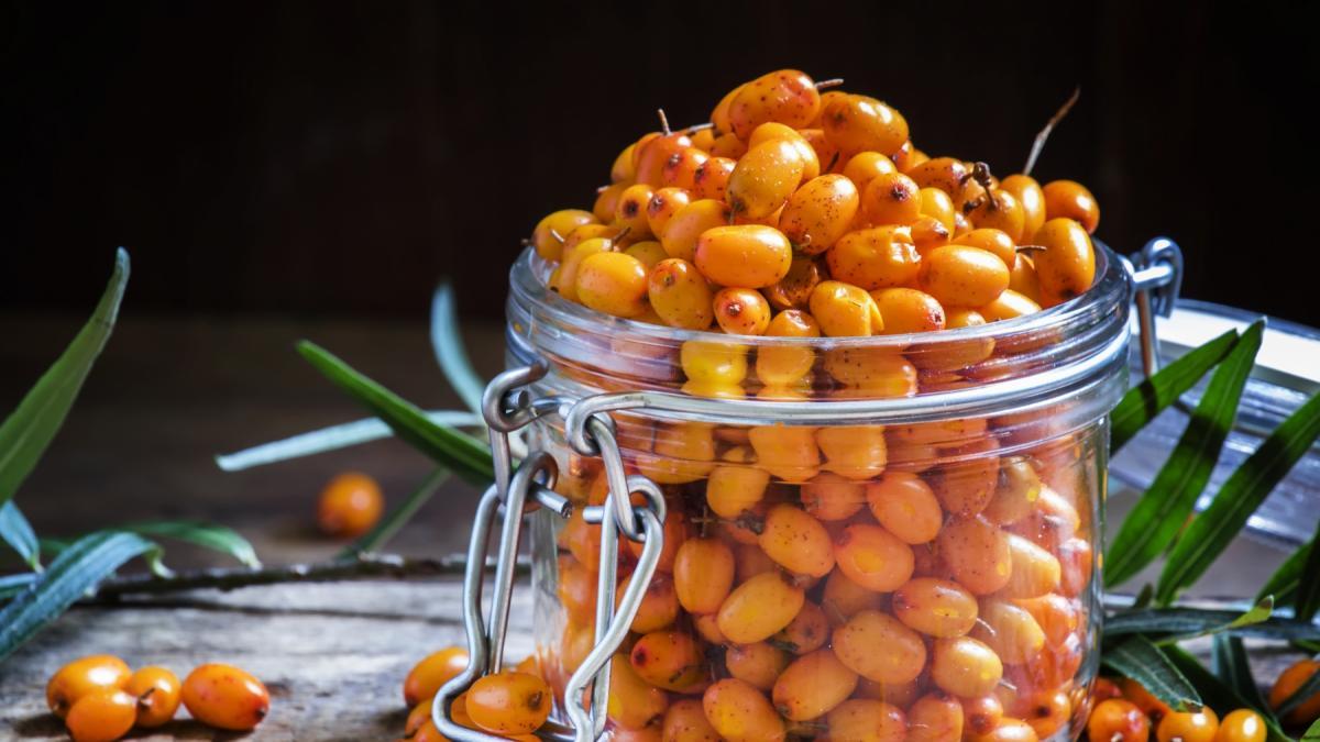 Bogactwo witaminy C w niewielkiej formie - sprawdź przepisy z rokitnikiem