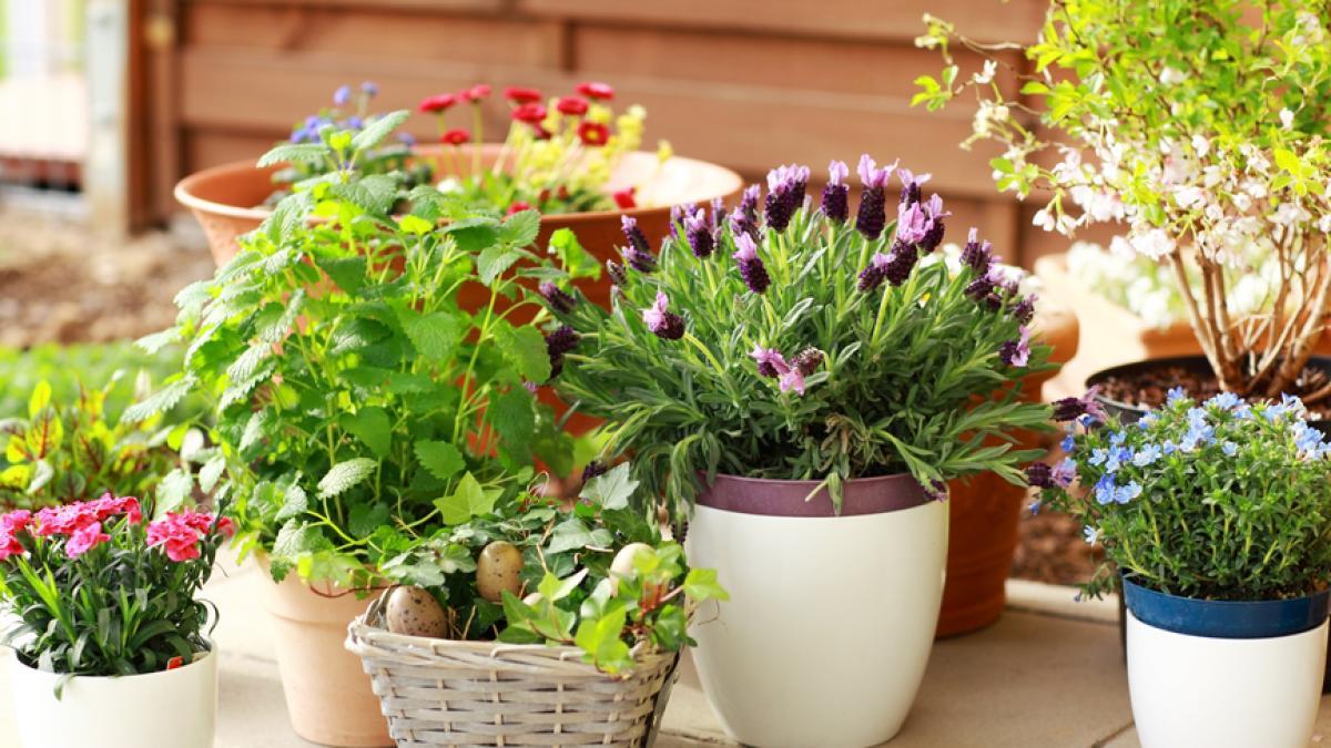 Co Zrobic Z Kwiatami Doniczkowymi Podczas Urlopu Porady Domowe Polki Pl