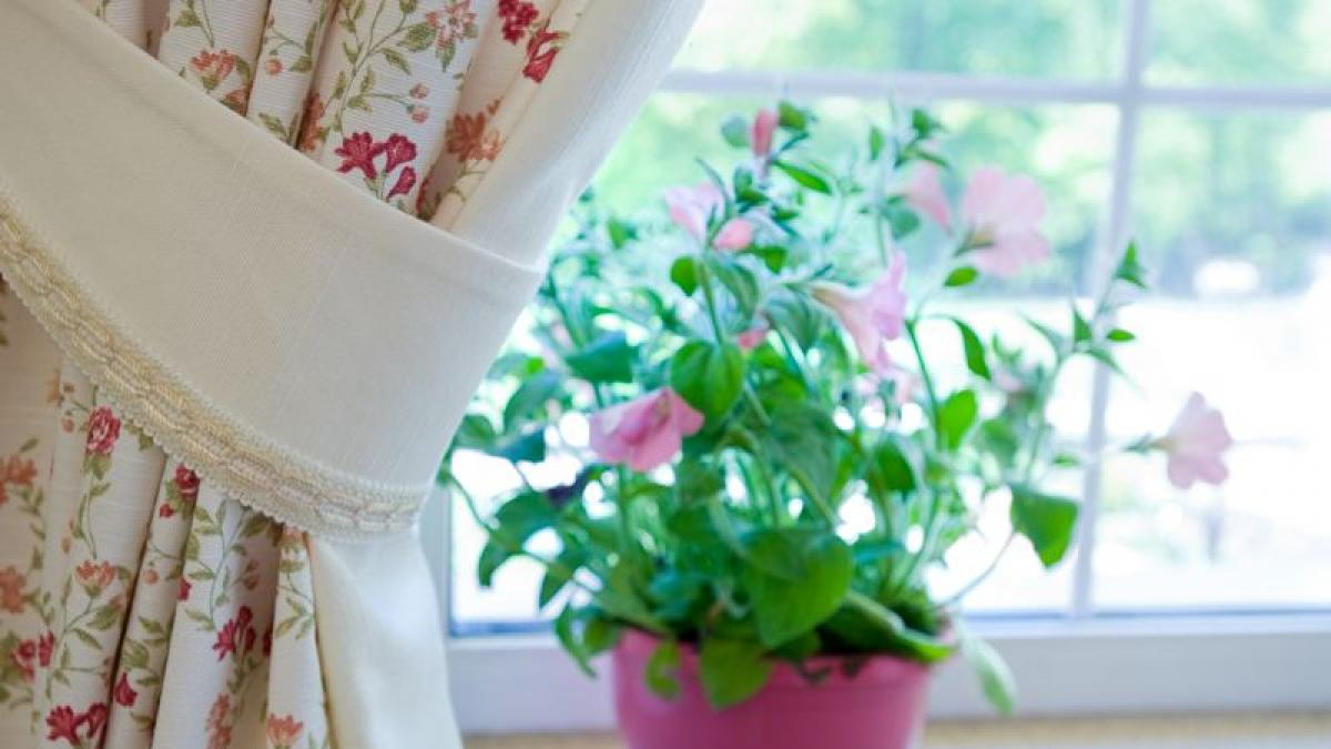 Jak Zabezpieczyc Kwiaty Przed Wyjazdem Na Urlop Poradnik Porady Domowe Polki Pl