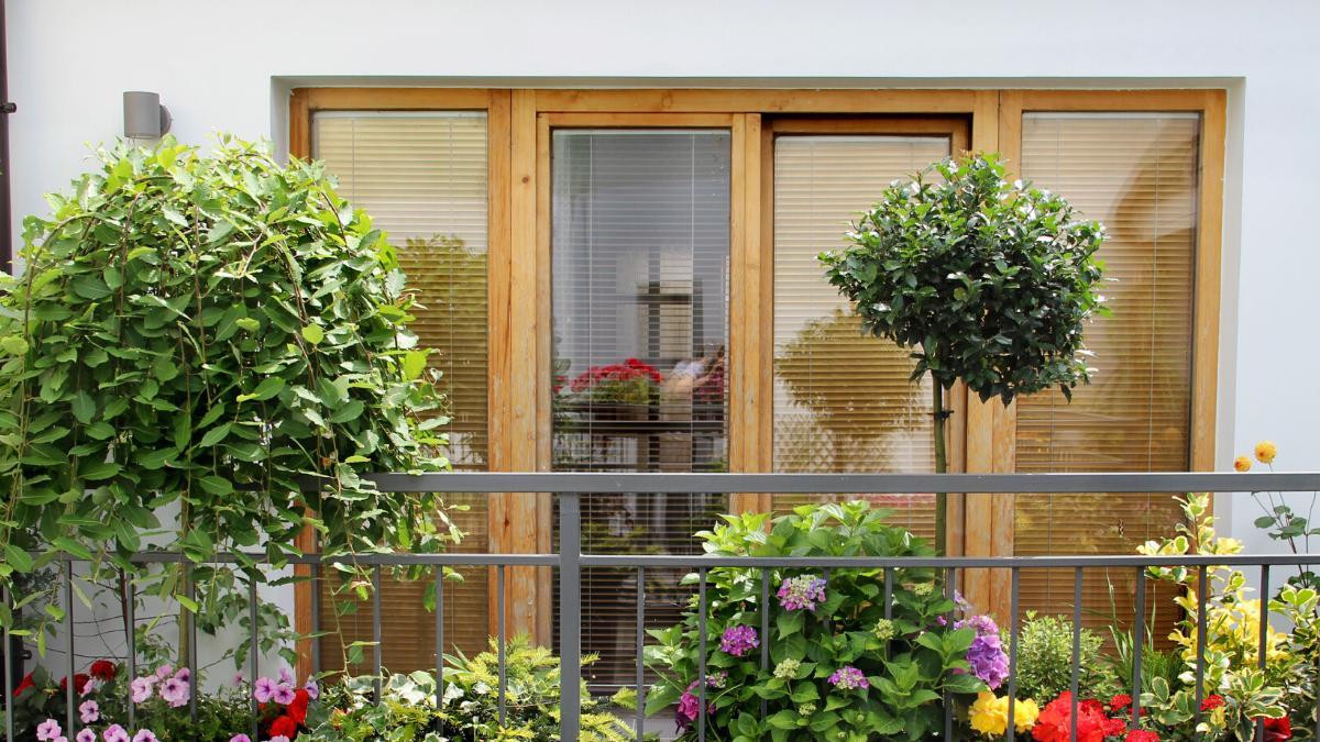 Jakie Kwiaty Na Balkon Wschodni Sprawdz Ktore Rosliny Wybrac Ogrod I Balkon Polki Pl