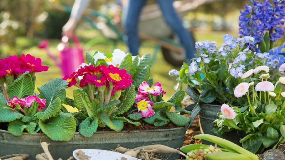 Jakie Kwiaty Posadzic W Ogrodzie 14 Najpopularniejszych Gatunkow Porady Domowe Polki Pl