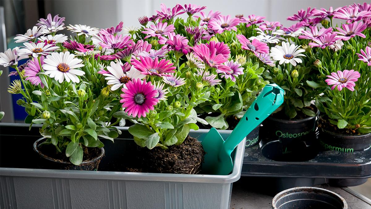Kwiaty Na Sloneczny Balkon Najpopularniejsze I Najpiekniejsze Gatunki Ogrod I Balkon Polki Pl