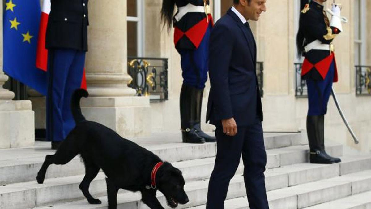 O psie, który obsikał kominek. Prezydencki pupil zaliczył nie lada wpadkę, ale reakcja Macrona była bezcenna