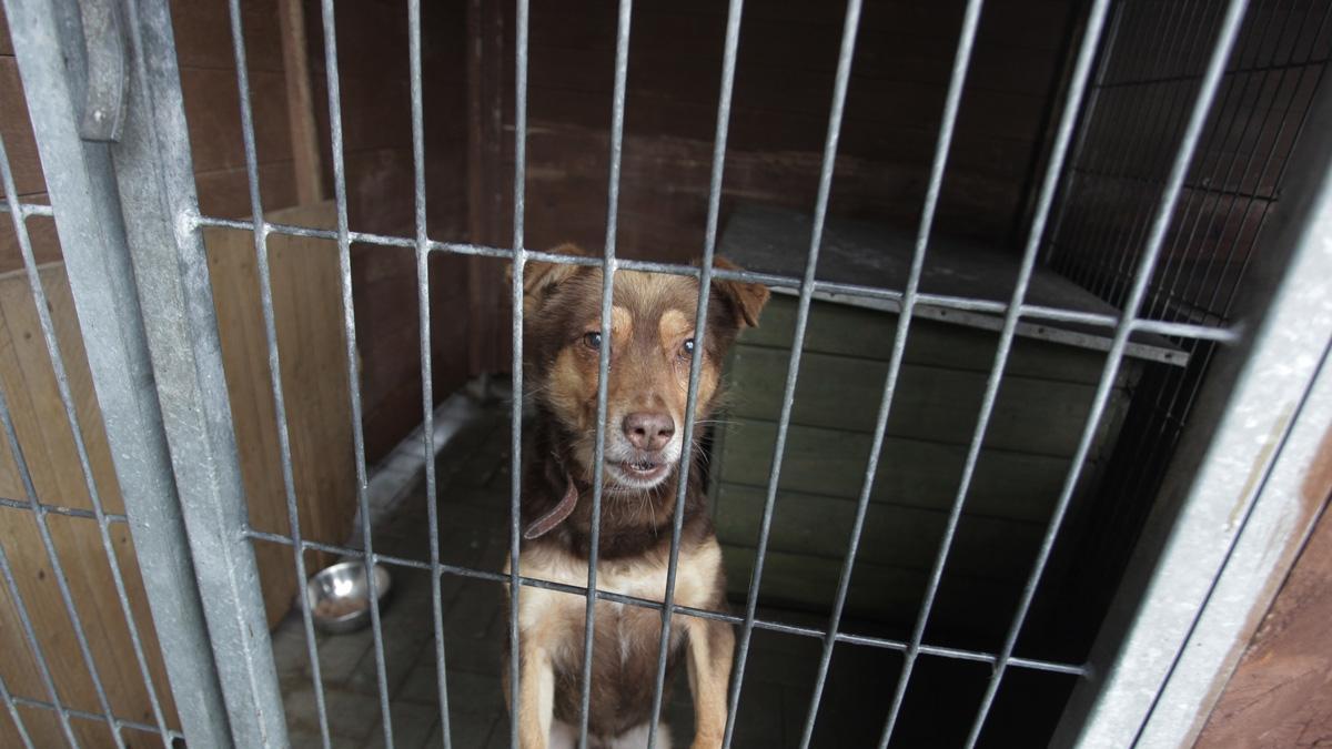 Okradziono schronisko dla bezdomnych zwierząt. Prosimy, pomóżcie!