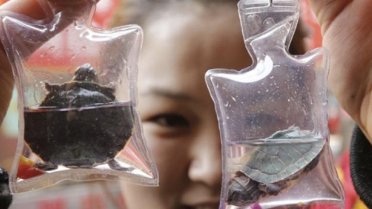 Okrutna moda w Chinach: breloki z ŻYWYMI zwierzętami!