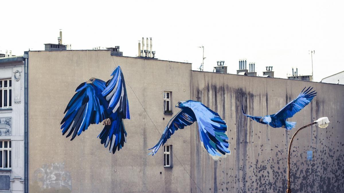 Piękne ptaki pojawiają się na budynkach w Łodzi. Kto tak maluje miasto?