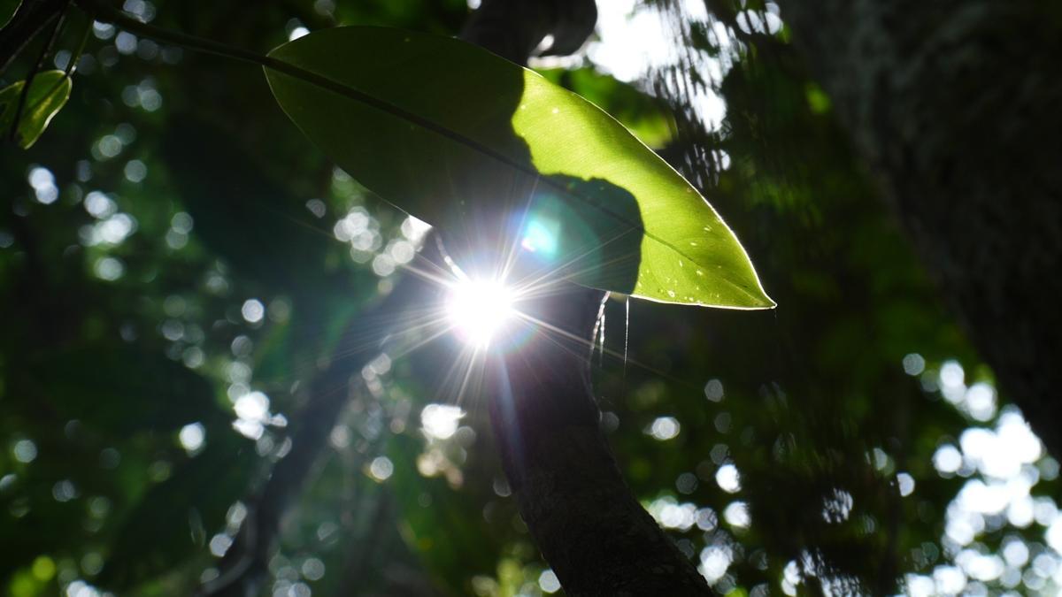Przejmująca cisza, ciemność i niepokój. Beata Pawlikowska pokazuje, jak naprawdę wygląda dżungla amazońska