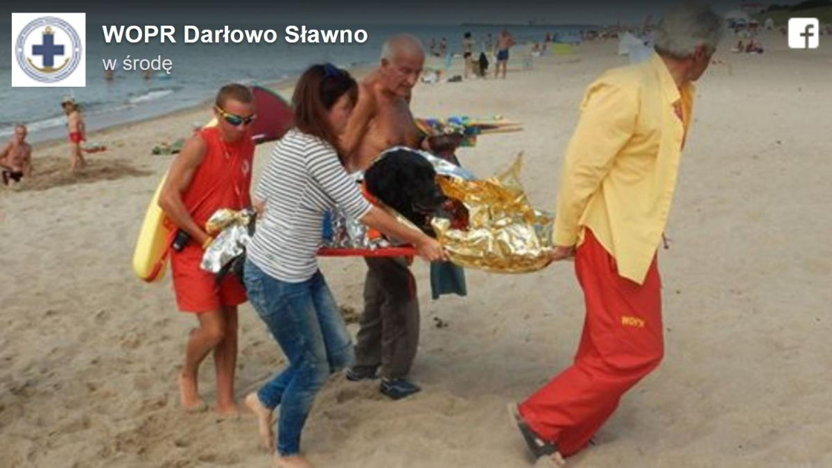 Ratownicy uratowali na plaży życie labradora. A czy ty wiesz co robić, gdy pies ma zawał?