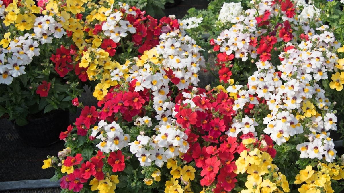 Rosliny I Kwiaty Na Balkon Poludniowy Wschodni Zachodni Polnocny Ogrod I Balkon Polki Pl