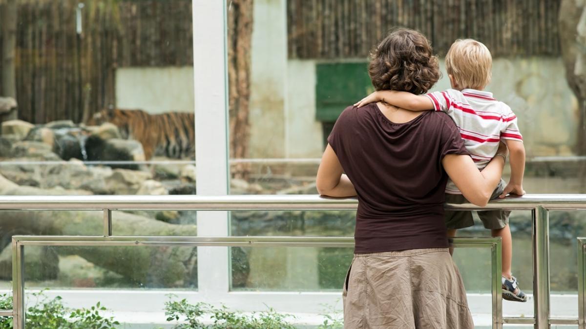 Sadzają dzieci na barierkach, zachęcają do głaskania i rzucania jedzenia… Nieodpowiedzialni rodzice są w zoo prawdziwą plagą