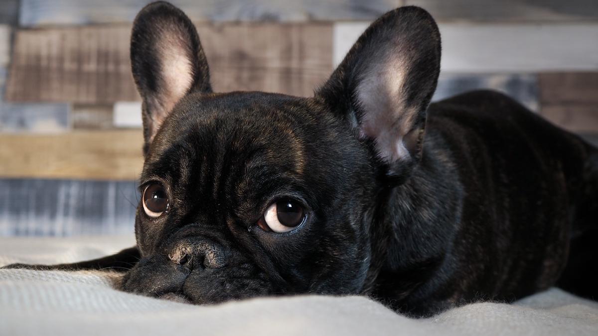 To same słodziaki! 8 najładniejszych ras psów