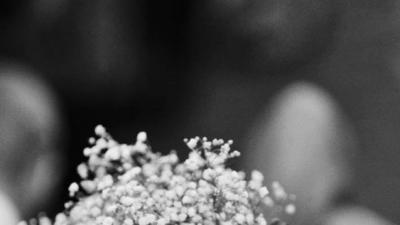 Dekoracje Kościołów i sal weselnych - Kwieciste Pomysły