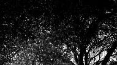 Delikatna, lekka, zwiewna (ODIN 5040)