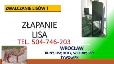 Odstraszanie lisów, tel. 504-746-203. Zabezpieczenie kurnika przed lisem, Wrocław. Jak odstraszyć Lisa ? Czy jest skuteczny sposób na pozbycie się lub jego złapanie ? Odłowienie lisów.