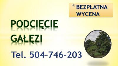 Przycięcie drzew, gałęzi, tel 504-746-203, podcięcie drzewa, Wrocław, cennik,Mirków, Kiełczów, Chrząstawa, Nadolice, Siechnice,  Dobroszyce Borowa Oleśnicka, Byków, Szczodre,