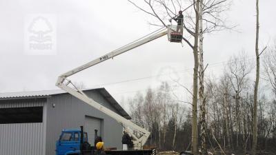 Przycinanie gałęzi, formowanie korony drzew Wrocław