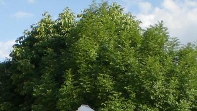 Śliczna Cymbeline Banjo 2008