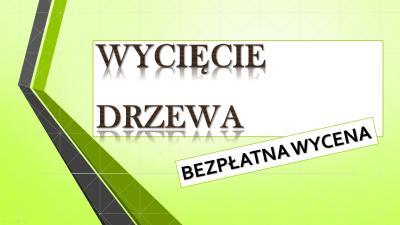 Wycięcie drzewa cena, Wrocław, tel. 504-746-203. ścięcie, wycięcie drzew.