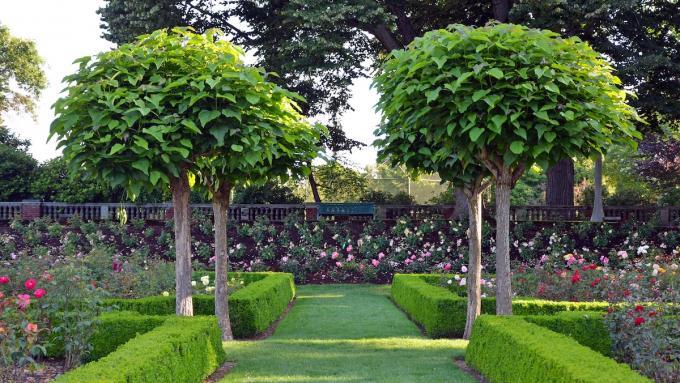 Drzewka Ozdobne Które Będzie Najlepsze Do Twojego Ogrodu