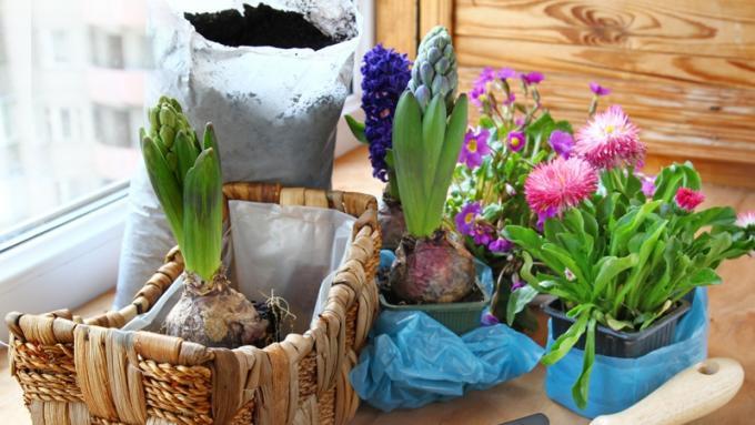 Kwiaty Doniczkowe Porady Domowe Polkipl
