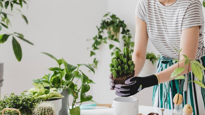 Kwiaty doniczkowe, które są mało wymagające – 9 najciekawszych
