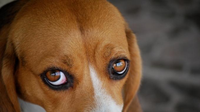czerwone oczy randki online