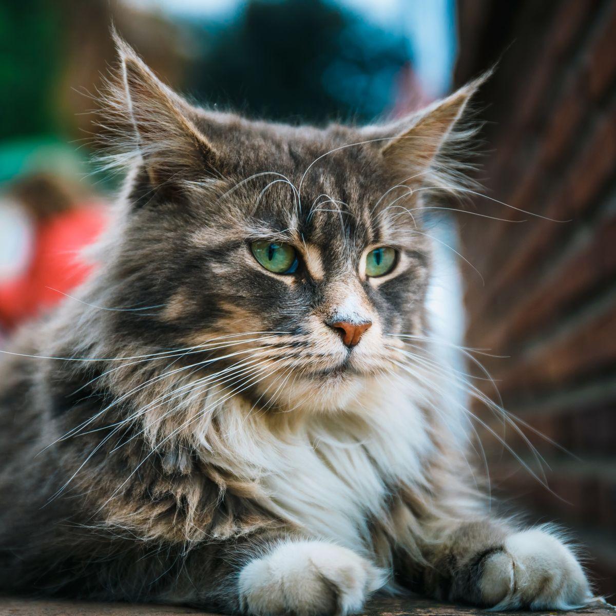 Jak Zabezpieczyć Doniczki Przed Kotem To Całkiem Proste I