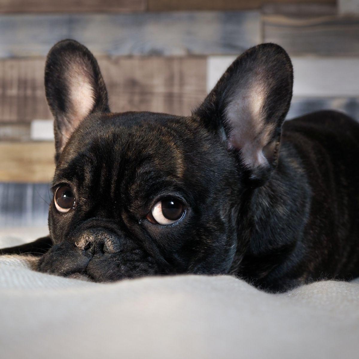 Wybieramy Psa Do Mieszkania W Bloku 5 Idealnych Ras Zwierzęta
