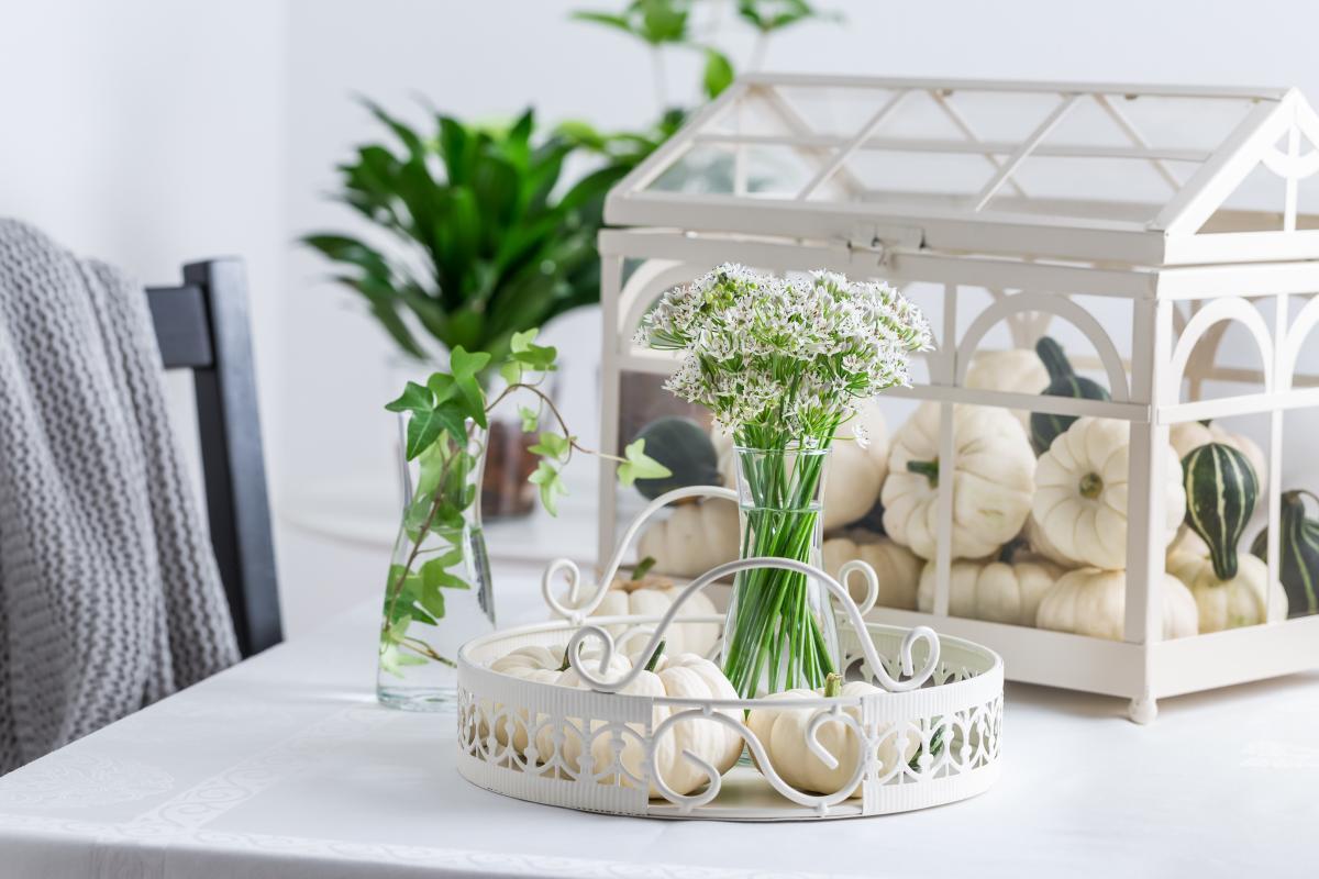 białe dynie dekoracyjne