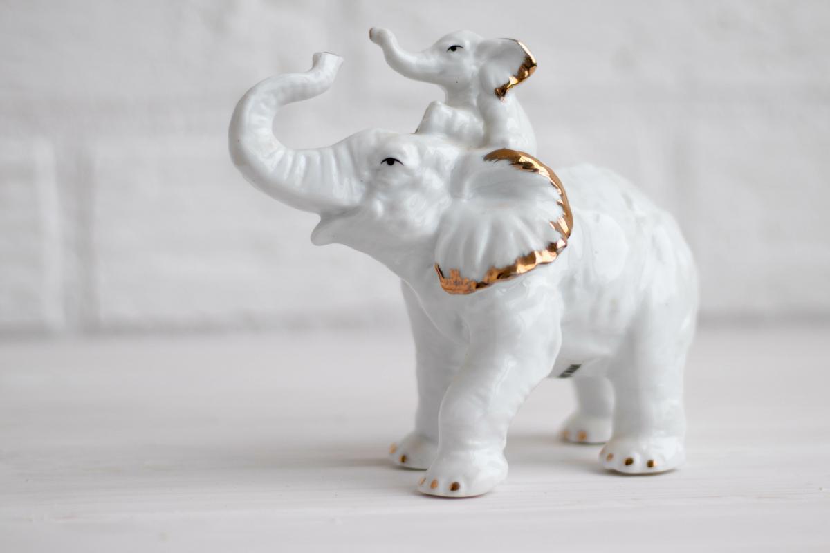 biały słoń na szczęście