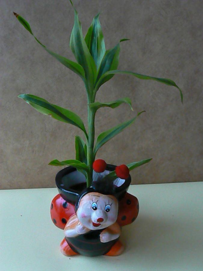 Donice od Kwiaciarni Oaza - zdjęcie