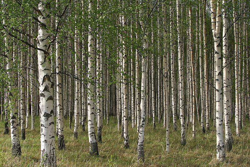 Drzewa które leczą