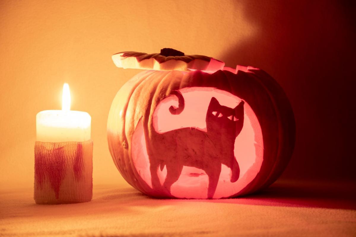 Dynia na Halloween wzór kota