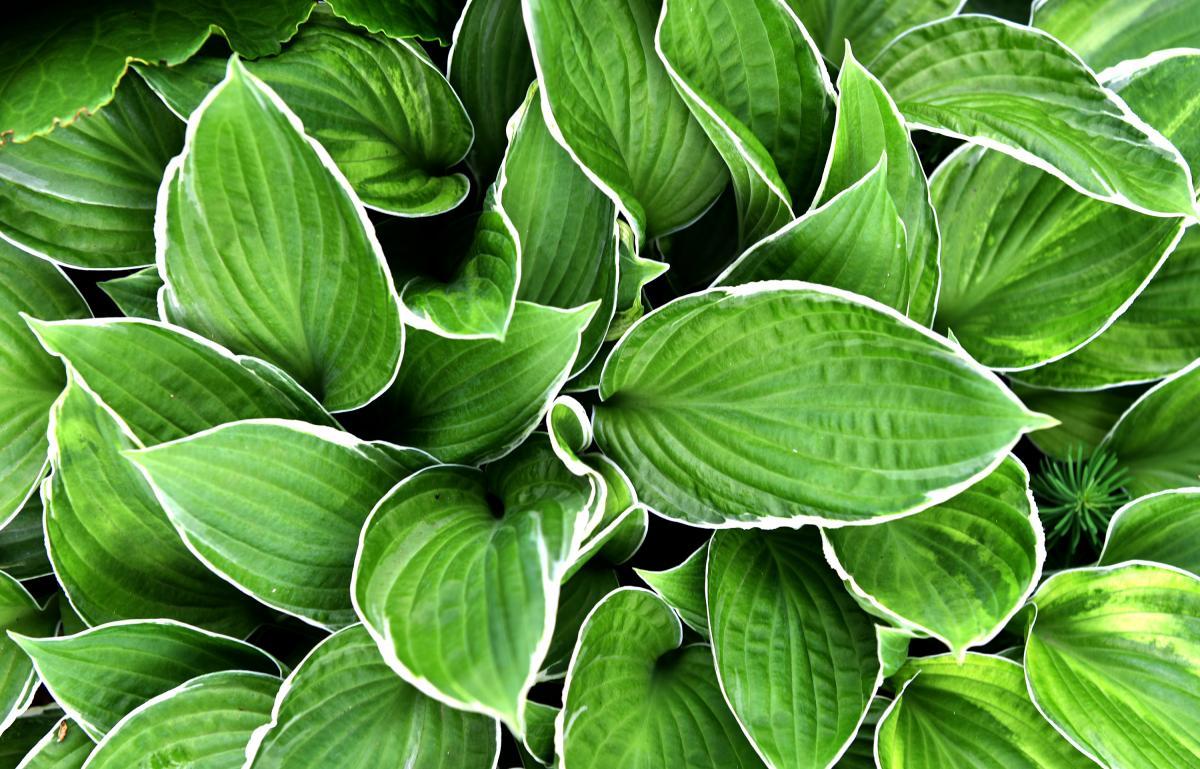 rośliny doniczkowe cieniolubne do ogrodu