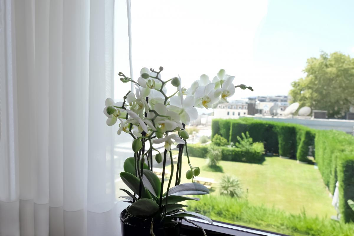 jak pobudzić storczyka do kwitnienia