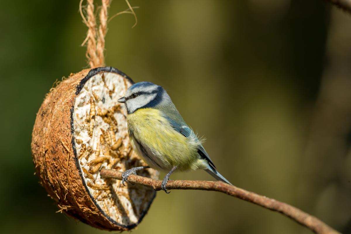 jak zrobić karmnik dla ptaków z kokosa