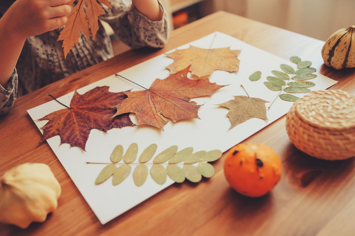 jak zrobić zielnik z liści jesiennych