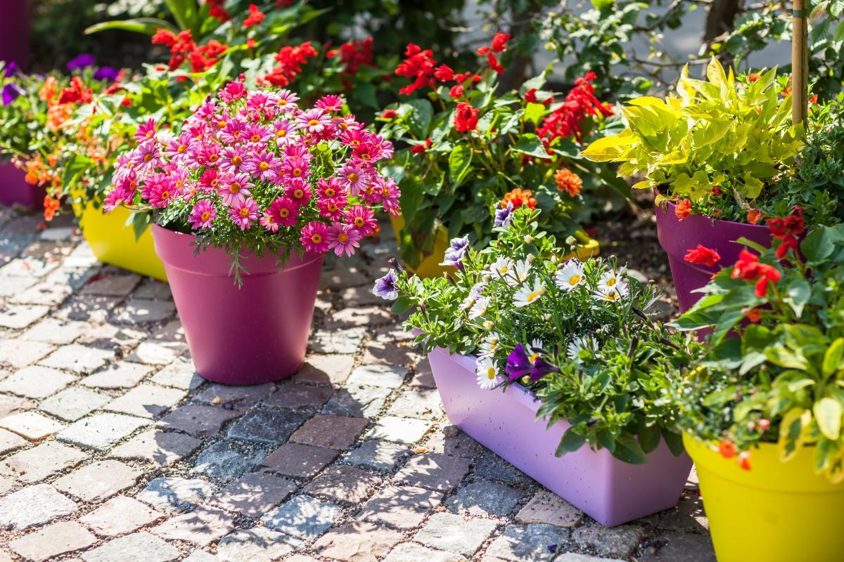 Kwiaty Do Donic Ogrodowych Jakie Kwiaty Sadzic W Donicach Ogrod I Balkon Polki Pl