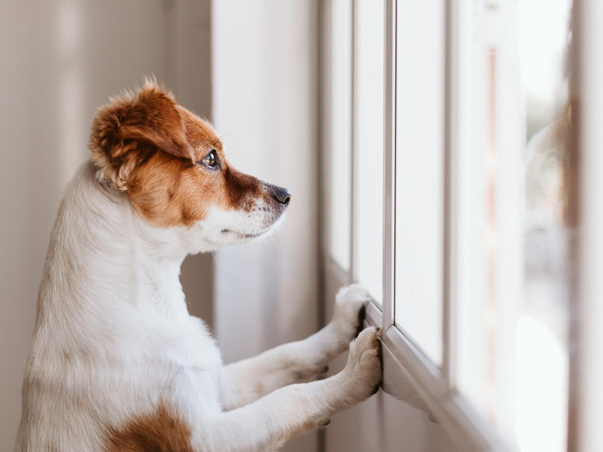 Pies - wymagające zwierzę domowe