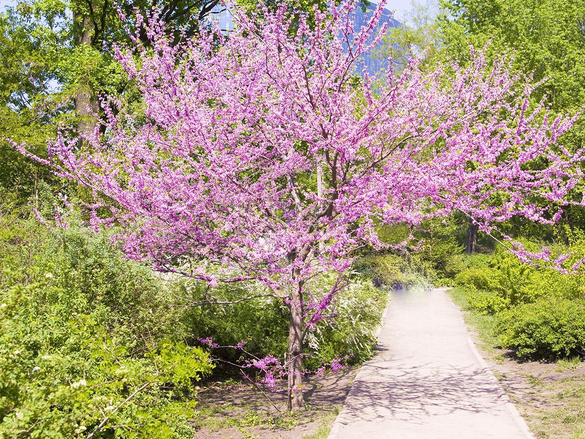 niskie drzewa do ogrodu
