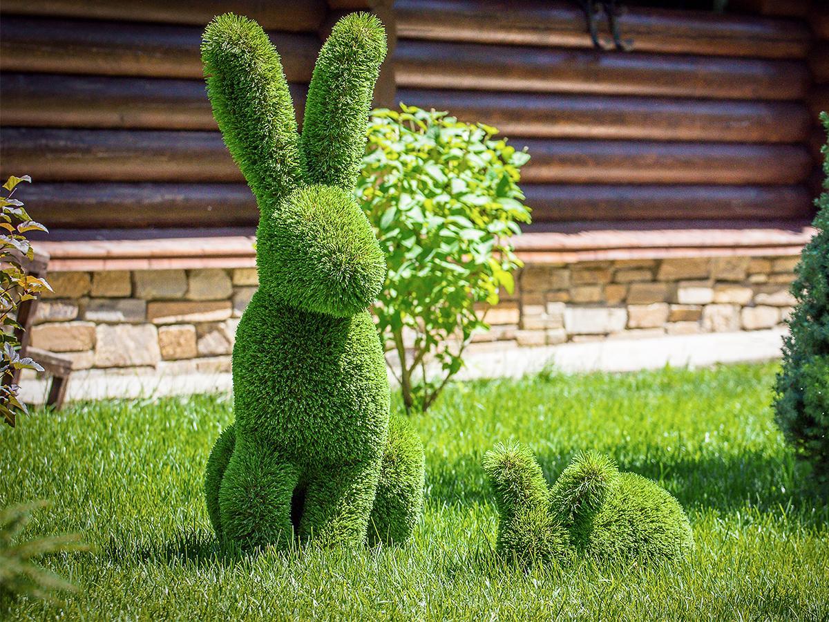 królik z krzewu