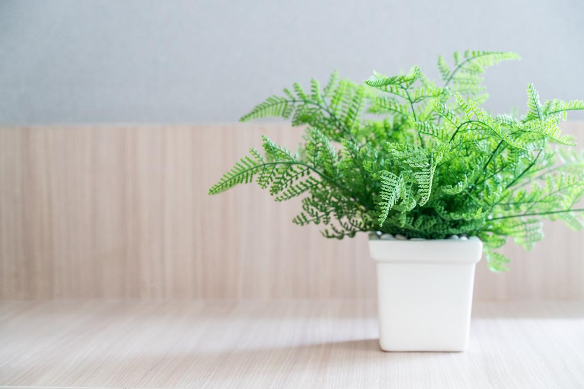 Kwiaty doniczkowe zielone - paproć