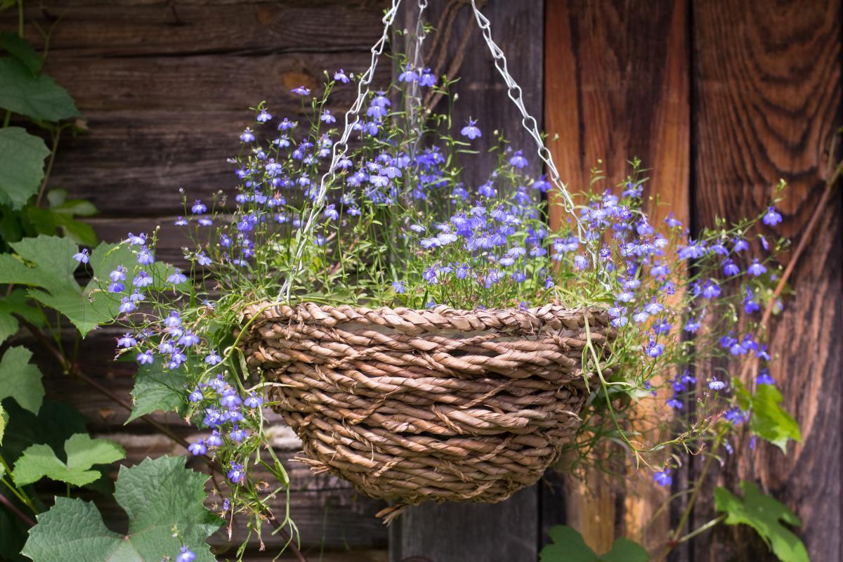 rośliny doniczkowe cieniolubne na balkon