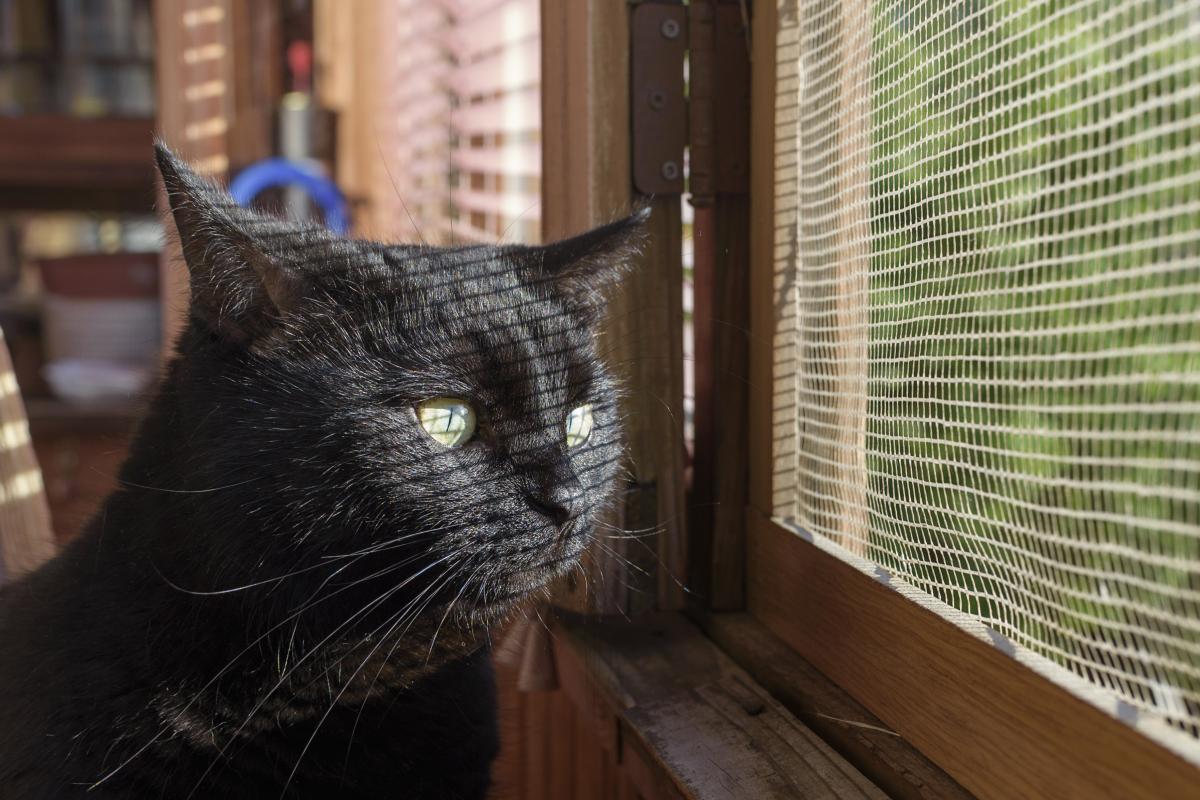 Moskitiera na okno