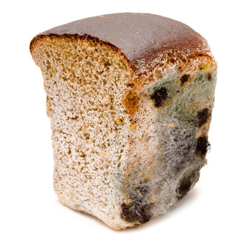 pleśń na pieczywie, pieczywo, chleb spleśniały