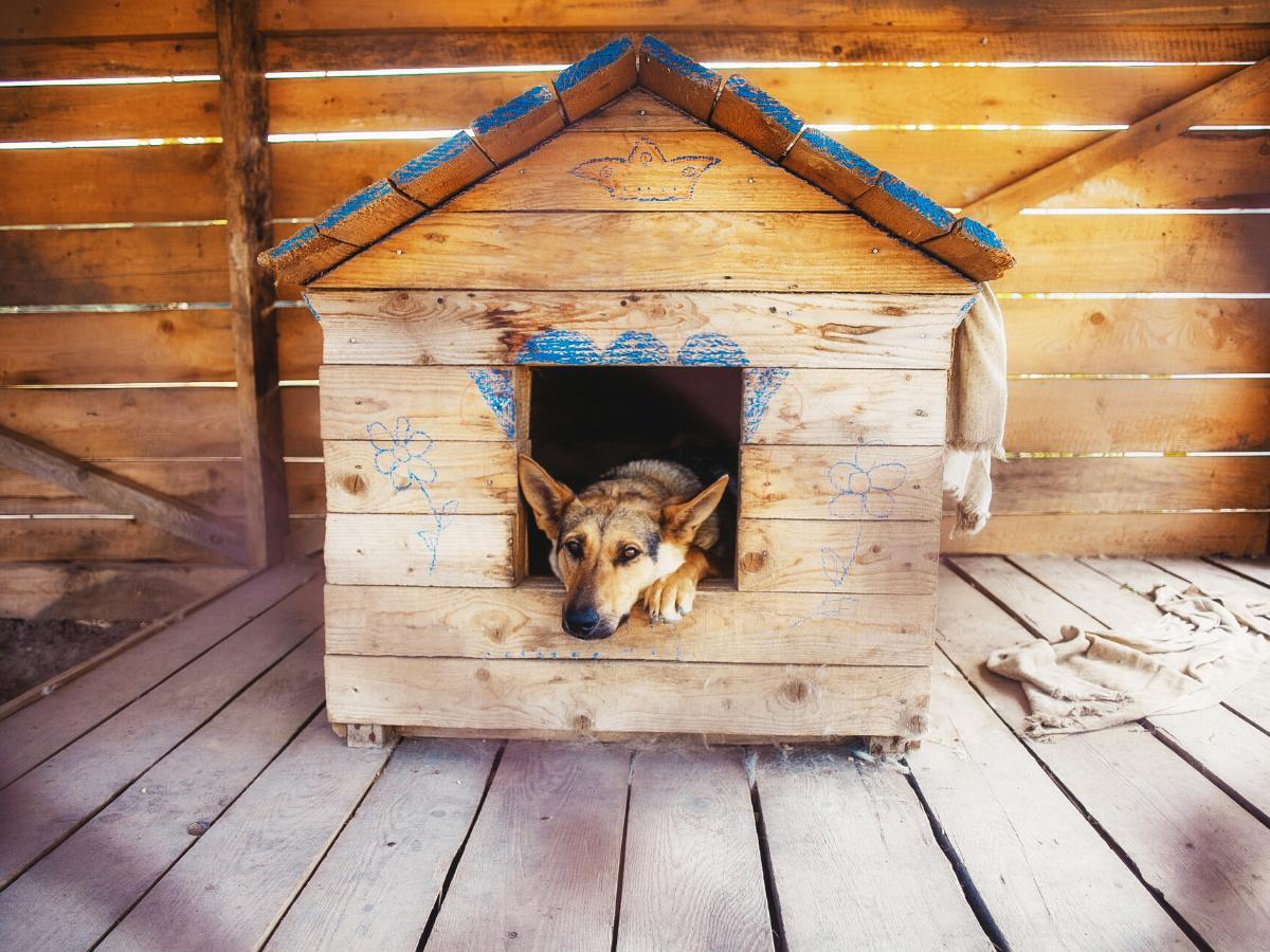 Sennik psia buda