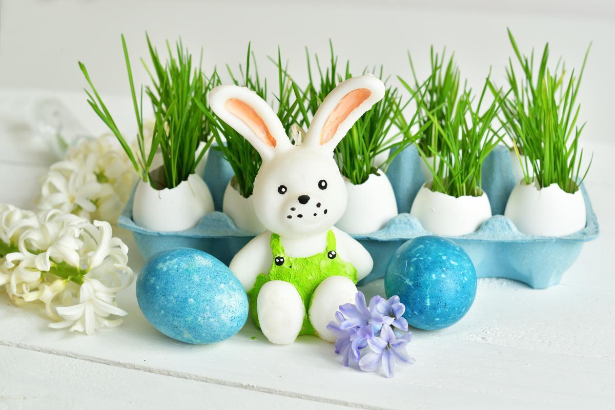 pszenica na Wielkanoc