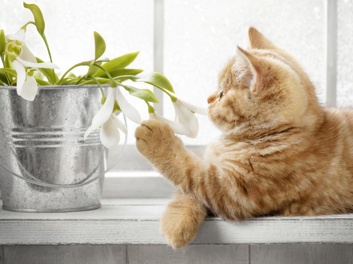 Trujące rośliny i rośliny bezpieczne dla kota