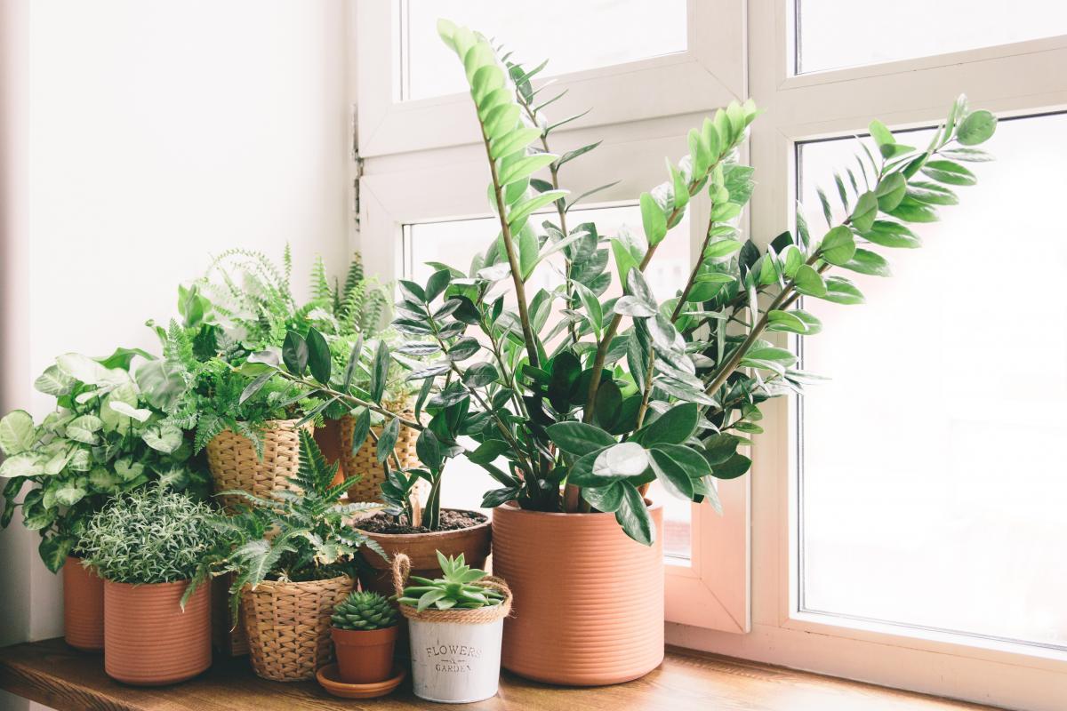 Rosliny Oczyszczajace Powietrze Kwiaty Doniczkowe Ktore Warto Miec W Domu Porady Domowe Polki Pl